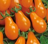 Насіння помідора Груша оранжева 0,1г