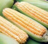 Насіння кукурудзи Хмельницький F1 30 000 шт