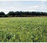 Травосуміші насіння сенокосной № 2 (1кг)