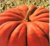 Насіння гарбуза Мускат де Прованс 10г (Коуел Італія)