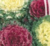 Насіння капуста декоративна суміш 0,3г
