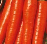 Насіння моркви Карлена 2г