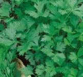 Насіння петрушки листової Карнавал 3г