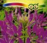 Насіння Клеома Фіолетова королева 0,3г (Гавриш)