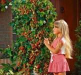 Насіння полуниці в'ється 10 шт ( ТМ Гавриш)
