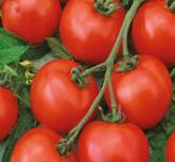 Насіння помідора Червона Шапочка 0,2г