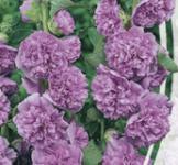Насіння Мальва махрова фіолетова 0,3г
