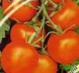 Насіння помідора Мандаринка 0,1г (Гавриш)