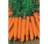 Насіння моркви Нантська 500г