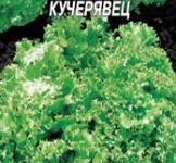 Насіння салата Одеський кучерявець 1г