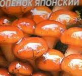 Насіння міцелій грибів Опеньок японський 10шт