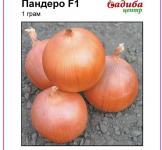 Насіння цибулі Пандеро F1 1г (Nunhems Голландія)