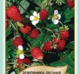 Насіння суниця лісова Регіна 0,1г (Legutko Польща)