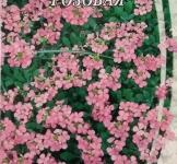 Насіння Арабіс альпійський рожевий 0,1г