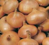 Насіння озимої цибулі-сіянки Амфора 1 кг