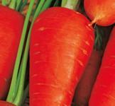 Насіння моркви Шантене 2г
