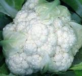 Насіння капусти цвітної Снігова куля 0,1кг