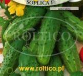 Насіння  огірка  Сопліца 5г (Roltiko Польща)