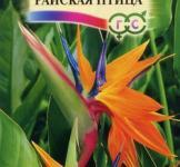 Насіння  Стрелітція  Райська  птаха  3шт