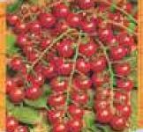 Насіння томата Саппоро 0,1г