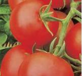 Насіння помідора Яблонька Росії 0,2г