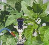 Насіння Тютюну Болівійський чорний 0,05г