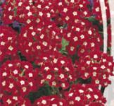 Насіння Вербени  червоної (0,1г)