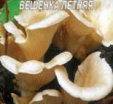 Насіння міцелій грибів Глива літня 5шт