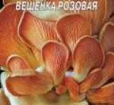 Насіння міцелій грибів Глива рожева 5шт