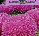 Насіння Айстри Джувел Пурпуріт (0,1г)