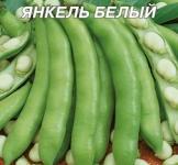 Насіння бобів Янкель білий 20г