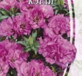 Насіння Годенції великоквіткової Кетлі (0,3г)