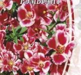 Насіння Годенції великоквіткової Рембрант (0,3г)