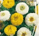 Насіння Хризантеми увінчастої махрової (0,5г)