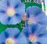 Насіння Іпомеї Блакитна зірка (1г)