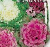 Насіння Капусти декоративної бахромчастої (0,3г)