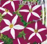 Насіння Петунії ампельної Пурпурова зірка F1 (10шт)