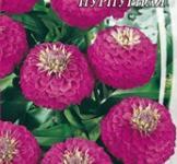 Насіння Майорців низькорослих пурпурових (0,5г)