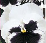 Насіння Фіалка великоквіткова Наречена 0,1г