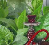 Насіння Тютюн Східний Ароматний 0,05г