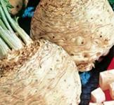 Насіння селери кореневої Яблучна 0,5г