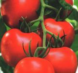 Насіння помідора Валютний 0,1г