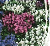 Насіння Чорноголовка великоквіткова суміш 0,1г